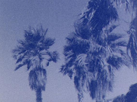 Talisa LallaiUntitled (Palm Trees) # 1, 2014Film stillCourtesy the artist