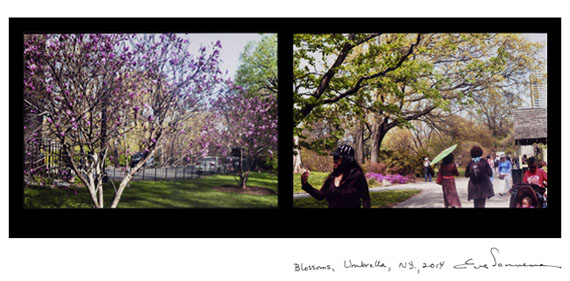 EVE SONNEMAN