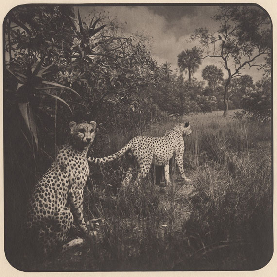 Garden of Memory : Animals #13, 2012, 