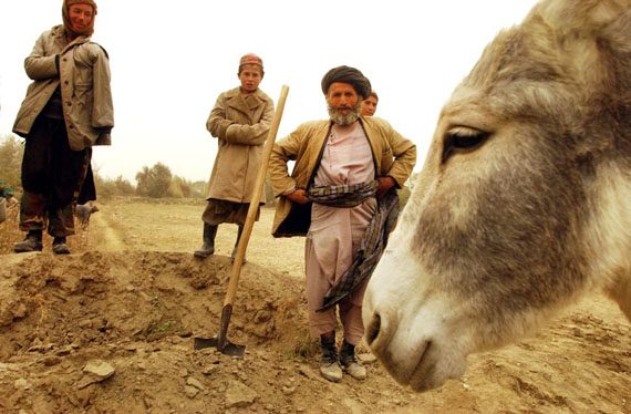 Mohammed yusef, an uzbek refugee, who works on the roads for an aid agency for 6kg of wheat a day, and who was chased from his home by the taliban, said the pastuns had black hearts. 2001 © James Hill