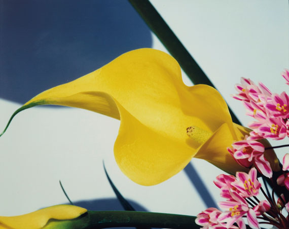 Lot 13NOBUYOSHI ARAKI (b. 1940)Sensual Flowers, 1997€8,000–12,000Courtesy Taka Ishii Gallery