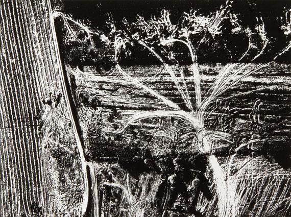 """Mario Giacomelli: from the series """"Presa di coscienza sulla natura"""", Italy, 1980"""
