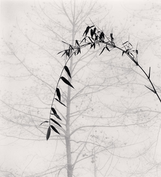 Michael Kenna: Bamboo and Tree, Qingkou Village, Yunnan, China. 2013