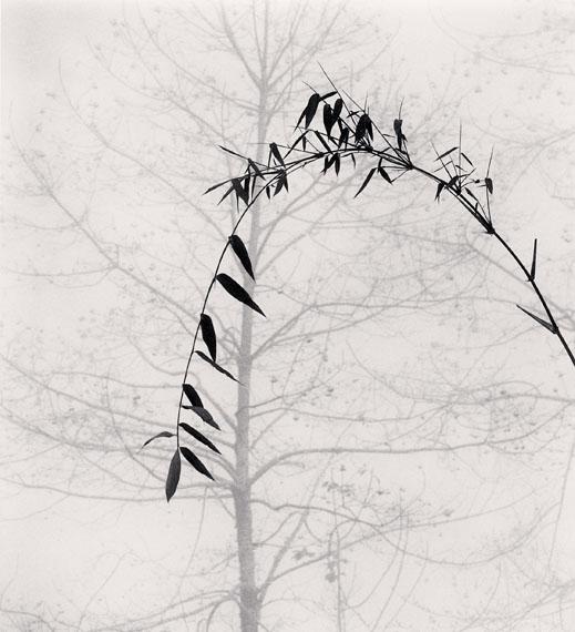 Michael Kenna: Bamboo and Tree, Qingkou Village, Yunnan, China. 2013