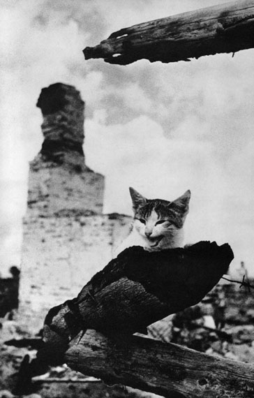 Mikhail Savin. In flames. Zhizdra. Wounded cat, 1943