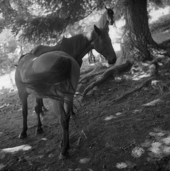 © Ines Lechleitner: Waldszene, Kapitel 4 aus H_Like Horses, Silbergelatine-Abzüge, 2015