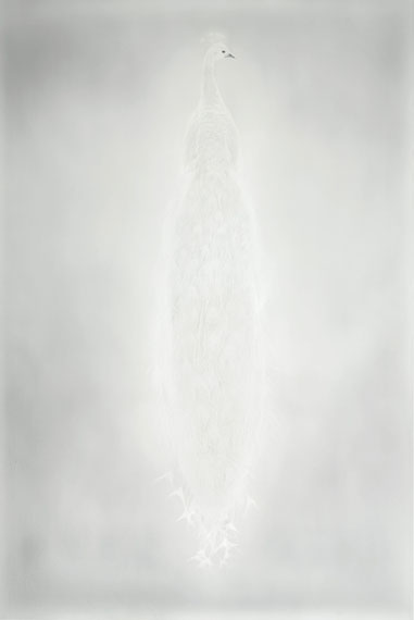 Lot 16Adam Fuss (b. 1961)Untitled, from 'My Ghost', 2011Archival pigment printNumber 3 from an edition of 11Image/flush-mount: 88 1/4 x 59 1/2 in. (224.2 x 151.1 cm.)$30,000–50,000To be offered in Photographs: The Evening SaleCopyright: Adam Fuss, courtesy Cheim & Read, New York