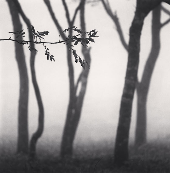 Michael Kenna: Chikui Cape Trees, Muroran, Hokkaido, Japan. 2002 © Michael Kenna