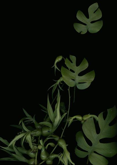 Luzia Simons: Jardim 5, 2014, Scannogramm, Pigmentprint auf Mitusamata Papier, 127 x 90 cm, Ed. 5