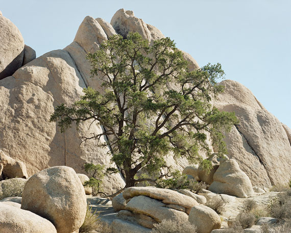 Marie-Jose Jongerius - Joshua Tree #3 (CA) 2007 - courtesy The Ravestijn Gallery