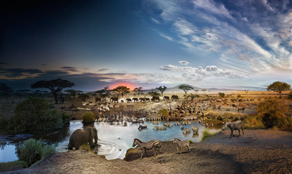 "Stephen Wilkes, Serengeti, Tanzania, Day To Night, 2015, 32""x54"", Digital C-print, Courtesy Monroe Gallery of Photography"