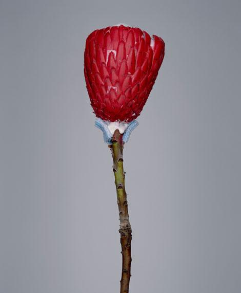 Bownik: Disassembly, 88 cm x 100 cm, 2012