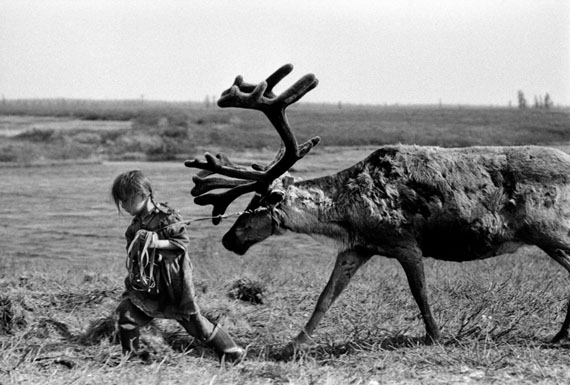 Alexander Shchemlyaev. Five-year old girl leads a deer in a sledge-bull, 1993
