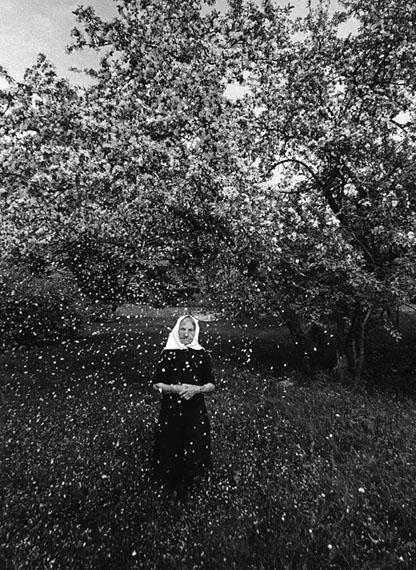 Romualdas Rakauskas. Blossom, 1974