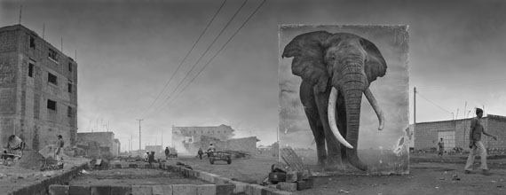 Nick Brandt: Road with Elephant, 2014, 