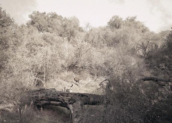Deers © Markus Henttonen