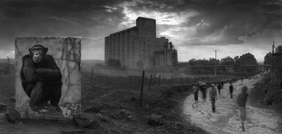 Nick Brandt: Factory with Chimpanzee, 2014