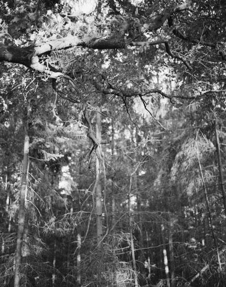Michael SchmidtUntitled (from NATUR), 1987/2014Gelatin silver bromide print, toned gold23.9 x 17.9 cm, framed 26.5 x 20.5 cm© Stiftung für Fotografie und Medienkunst mit Archiv Michael Schmidt
