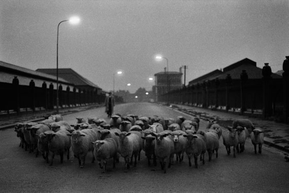 Don McCullin - Sheep going to the Slaughter, Early Morning, Near the Caledonian Road, London, 1965 © Don McCullin
