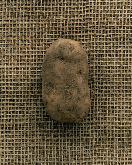 Claus Goedicke: Kartoffel, 2008© Claus Goedicke