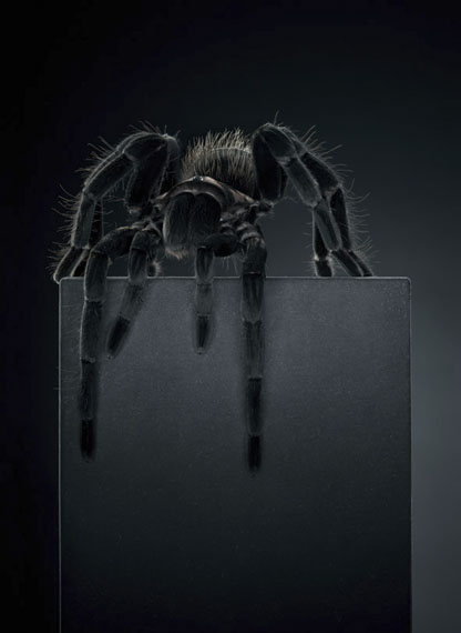 Peter Hebeisen: Tarantula, 2012 