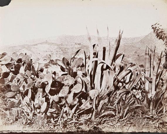 Charles Clifford, lot 44, Málaga, Nopales y pitas, 1862