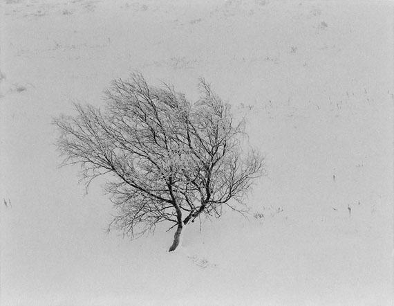 © Jens Knigge: 'Frozen Tree', Platin-Palladium-Print auf Arches Papier 2015 / Courtesy Johanna Breede PHOTOKUNST