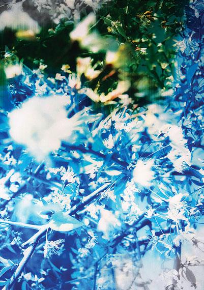 Han Lei, Flowers 2016Courtesy M97 Gallery, Shanghai