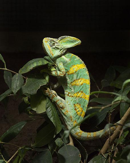 Juliane Eirich: Chameleon, 2014
