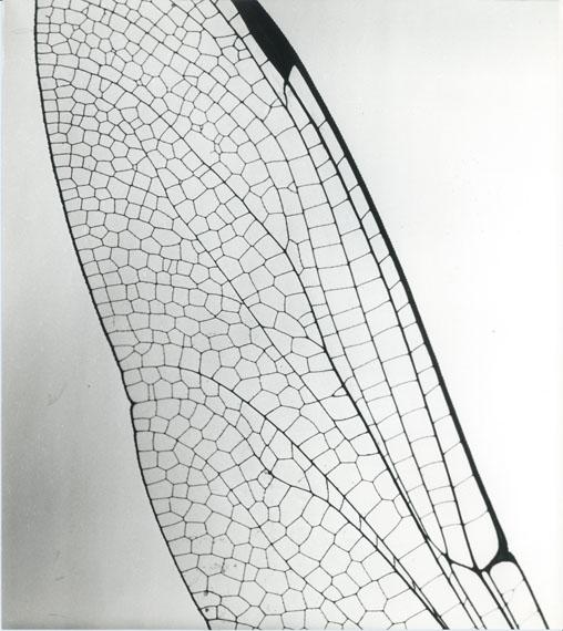 "© Hannes Kilian: ""Libellenflügel"", 1954 / Courtesy Johanna Breede PHOTOKUNST"