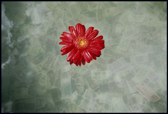 """A gerbera daisy floats in a large vat of water where offerings of small Yuan notes have sunk to the bottom, at Jokhang Monastery in Lhasa,"" 2010 © Marissa Roth"