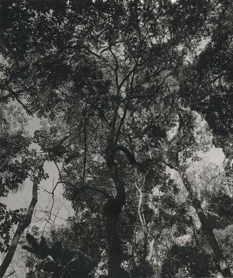 Árvores #07, aus der Serie Árvores © Arno Schidlowski
