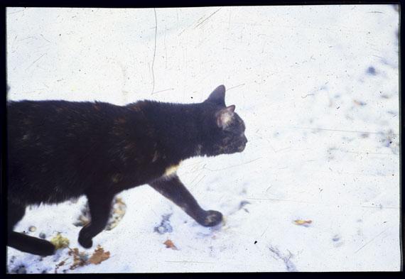 Susanne Wehr: Mecki, 1993