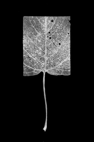 Henrik Strö̈mberg, leaf cut 05, 2016