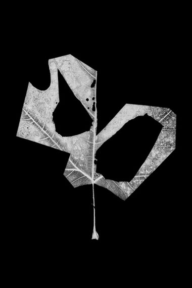 Henrik Strömberg, leaf cut 11, 2016