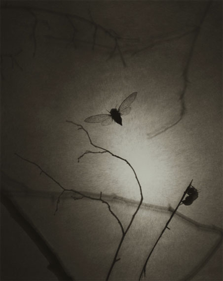 Ryuji Taira: Spray, 2008, platinum palladium print on Japanese Gampi tissue, 25,4 x 20,3 cm