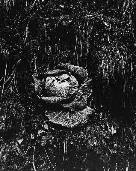 Kåre KivijärviKaalhode, Essen (Cabbage)1960Silvergelatin vintage print49 x 39 cm