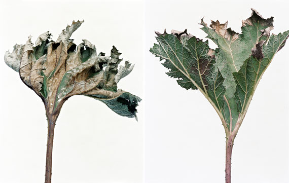 Thomas Flechtner: LEAVES (No. 2 & 3), 2017, Analog C-Print, 175 x 140 cm, Edition 3 & 1 AP