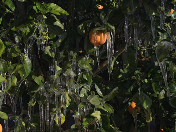 Ice to Protect Orange Trees from the Cold, California. © Lucas Foglia, courtesy Michael Hoppen Gallery
