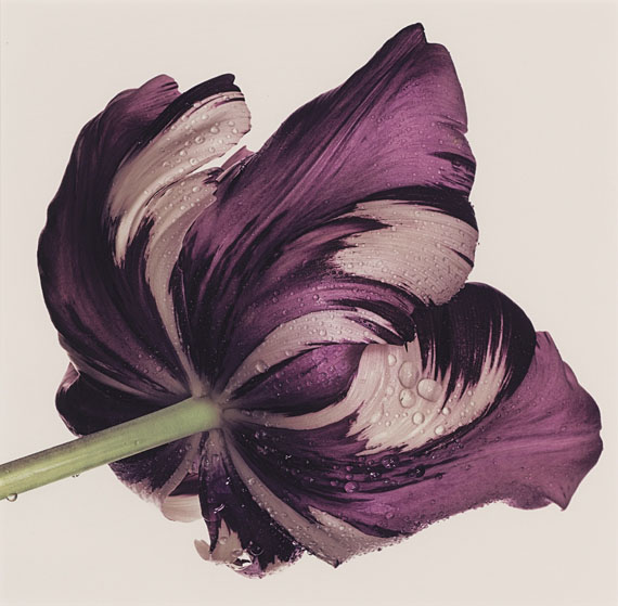 Lot 3