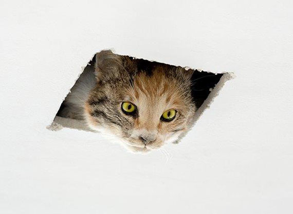 Eva & Franco Mattes, Ceiling Cat, 2016, Taxidermy cat, polyurethane resin, hole © Eva & Franco Mattes, Courtesy Carroll/Fletcher, London