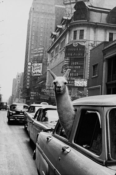 Inge Morath: Lama, Times Square, New York City, 1957