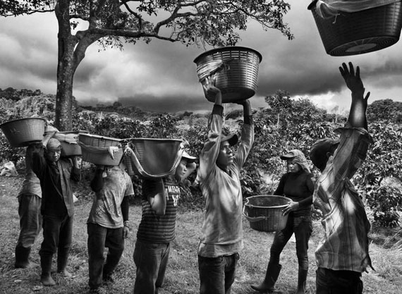 Coffee pickers. Finca La Hilda on the slopes of Poas volcano, San José region, Costa Rica, 2013