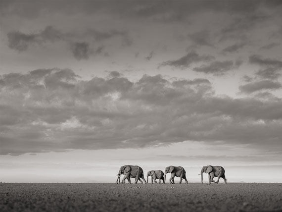 "Joachim Schmeisser: ""Elephants crossing"" Kenya 2017"