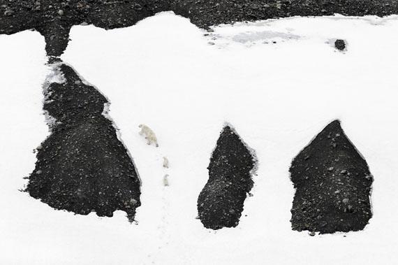 Vincent Munier: Eisbären, 2014