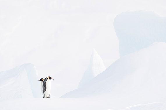 In the Frosty White / Im Eisigen Weiss