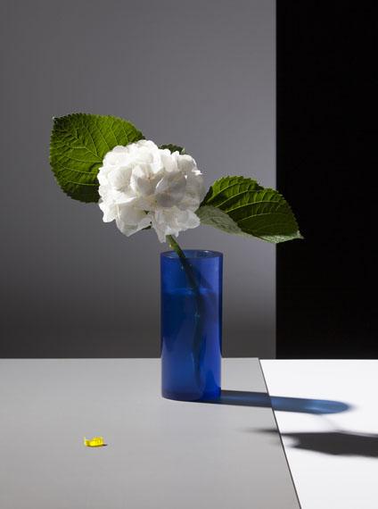 Felix Dobbert: Some Flowers © Felix Dobbert