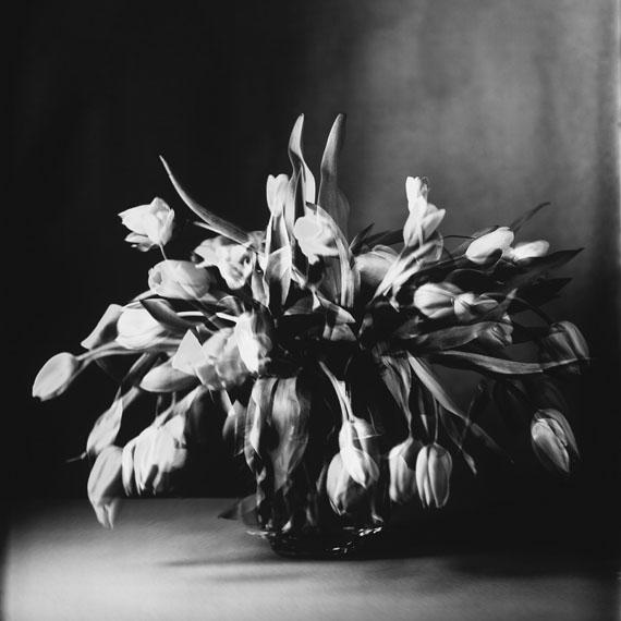 """Susanna Kraus: """"Tulpen IV"""", IMAGOgramm, 62 x 62 cm, Silbergelatineabzug vom Unikat auf Barytpapier, 2015© Kraus_Kohlmayer"""