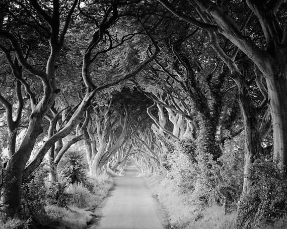 The Dark Hedges #3, Ireland 2014 © SILVERFINEART