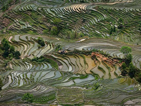 Edward BurtynskyRice Terraces #4, Western Yunnan Province, China2013, C-print, 99 x 132 cm© Edward Burtynsky